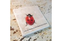 Marble Square Inspiration Ladybird